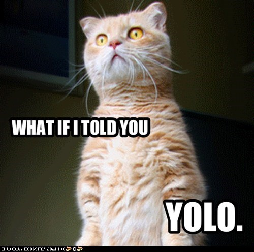 YOLO KITTY.
