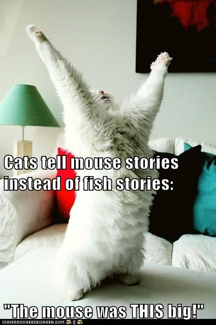 "Cats tell mouse stories instead of fish stories: ""The mouse was THIS big!"""