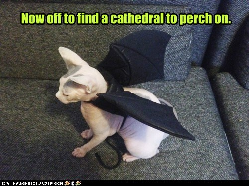 gargoyle,cathedral,church,architecture,captions,perch,Cats