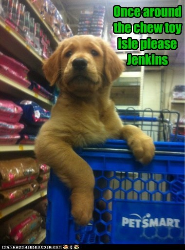 Once around the chew toy  isle please Jenkins