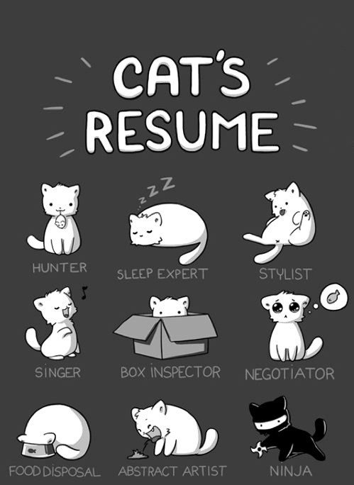 Cat's Resume of the Day