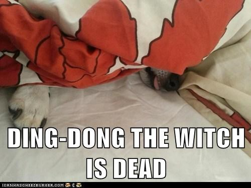 DING-DONG THE WITCH IS DEAD