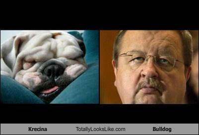 Krecina Totally Looks Like Bulldog