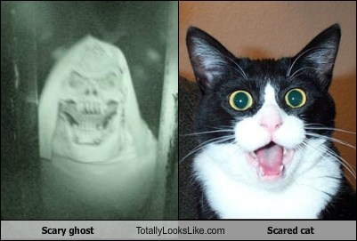 Scary ghost Totally Looks Like Scared cat