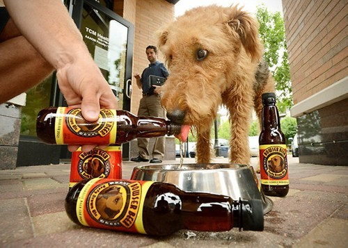 Beer For Dogs of the Day