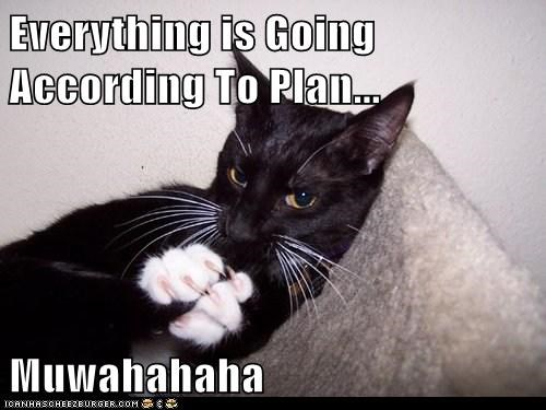 Everything is Going According To Plan...  Muwahahaha