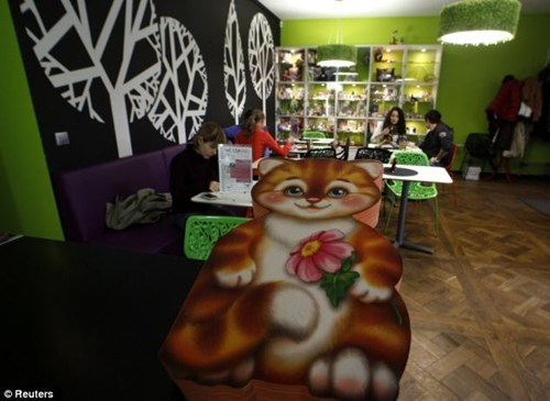 awesome,adorable,cat,Cats,creative,coffee,cafe,Sanctuary,russia