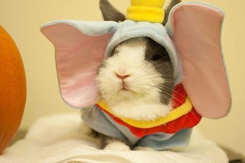 Bunday: Dumbo