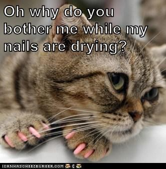 Oh why do you bother me while my nails are drying?