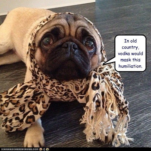 drinking,dogs,pug,head scarf,babushka,vodka,old country,humiliated