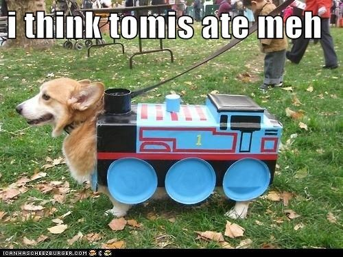 i think tomis ate meh