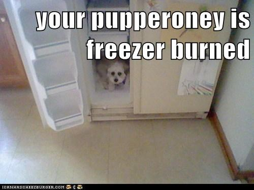 your pupperoney is freezer burned
