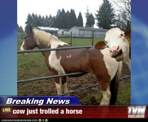 Breaking News - cow just trolled a horse