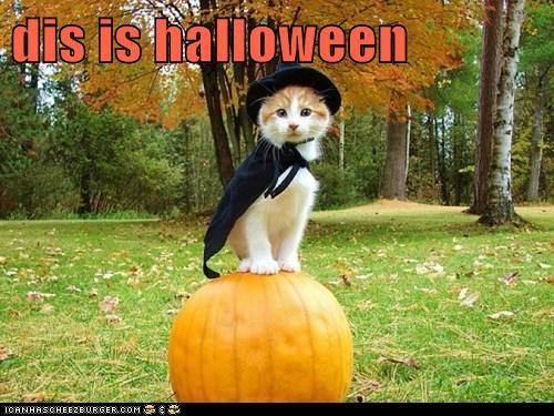 dis is halloween
