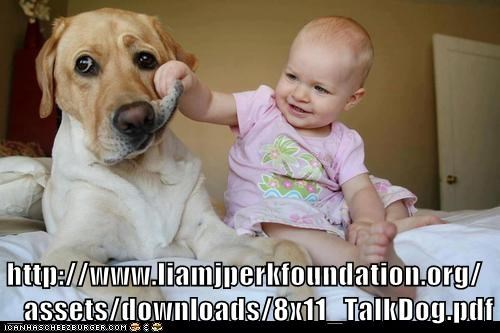 http://www.liamjperkfoundation.org /_assets/downloads/8x11_TalkDog.pdf
