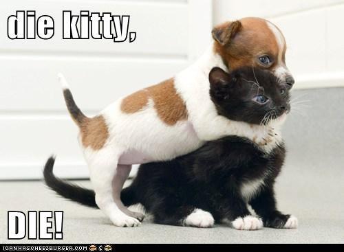 die kitty,  DIE!