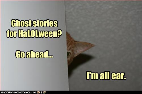 Juss wun moar skaerdee kat.