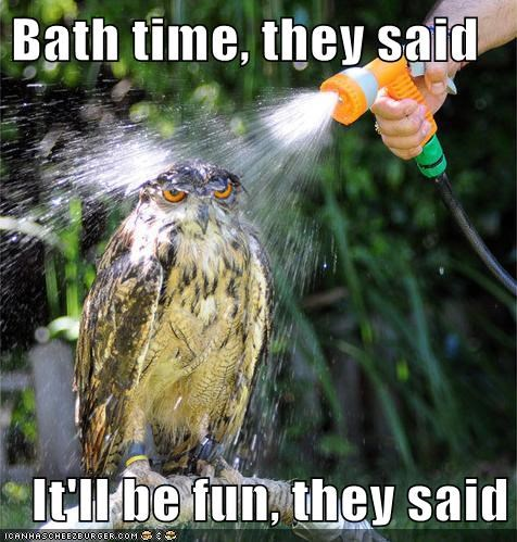 annoyed,wet,bath time,Owl,it will be fun they said,hose,They Said