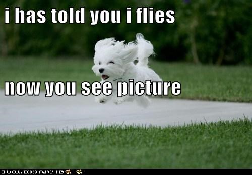 i has told you i flies now you see picture