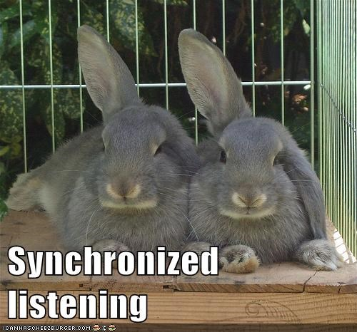 bunnies,ears,sport,listening,synchronized