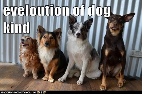 eveloution of dog kind