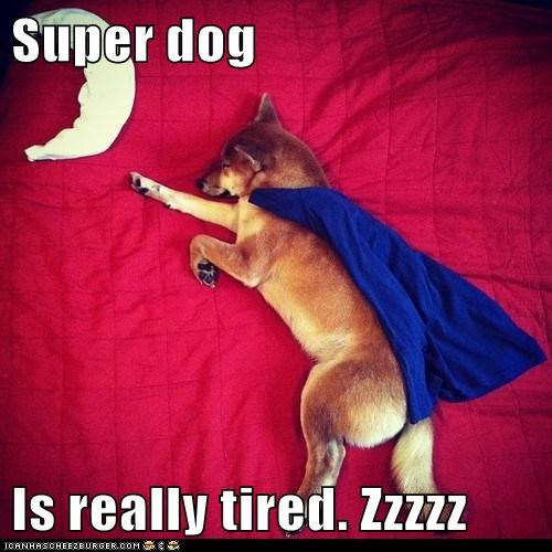 Super dog  Is really tired. Zzzzz