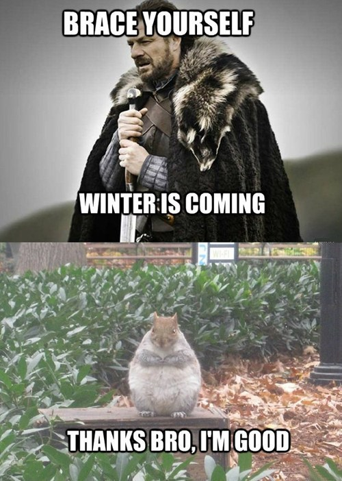 fat,Winter Is Coming,bro,Game of Thrones,ned stark,brace yourselves,squirrel,winter