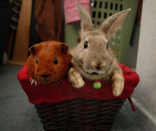 Interspecies Love: Basket Buddies