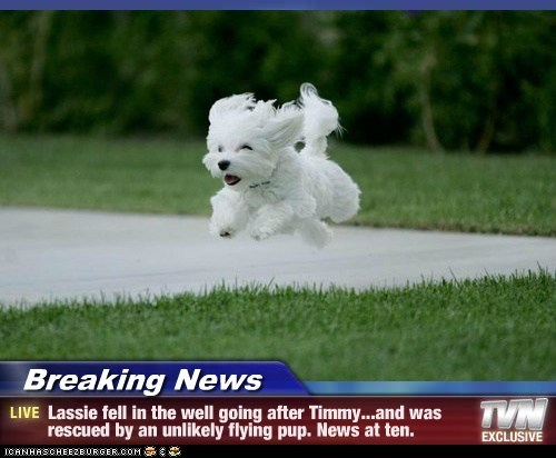 Breaking News - Lassie fell in the well going after Timmy...and was rescued by an unlikely flying pup. News at ten.