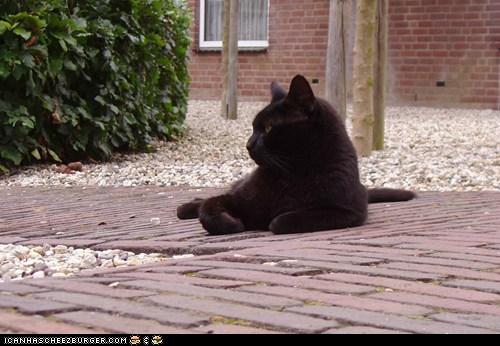 "Nero keeps an eye on ""things""... (20090729)"