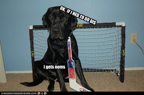 Goalie dog