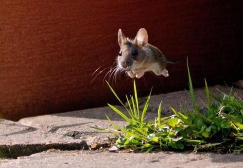 hover,squee,whiskers,flying,mouse,delightful insurance