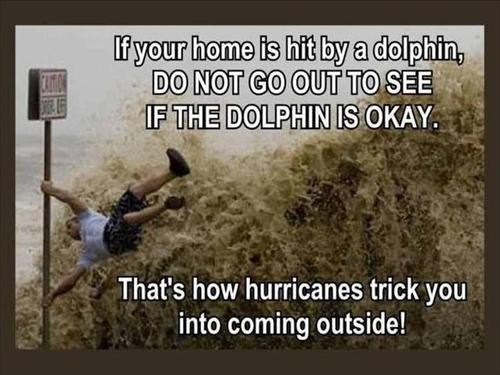 This Hurricane is Dolphin Safe