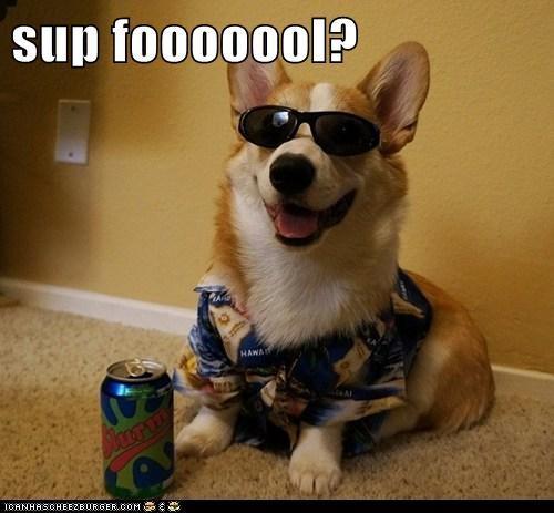 sup fooooool?