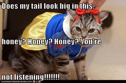 Does my tail look big in this, honey? Honey? Honey? You're not listening!!!!!!!