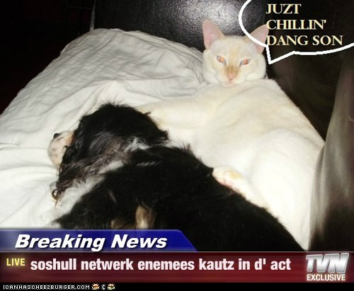 Breaking News - soshull netwerk enemees kautz in d' act