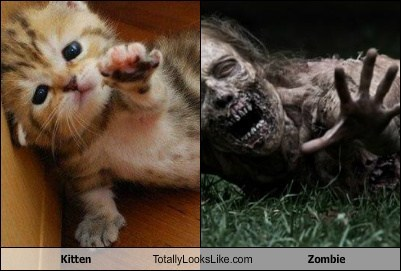 Kitten Totally Looks Like Zombie