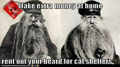 Make extra money at home  rent out your beard for cat shelters