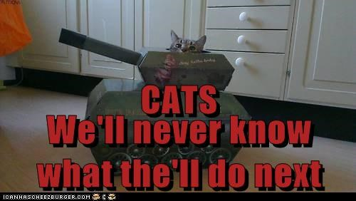 CATS We'll never know what the'll do next