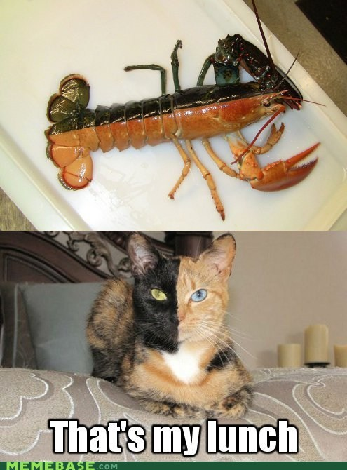 lobster,cat,that's my lunch,two face,halloween,miracle