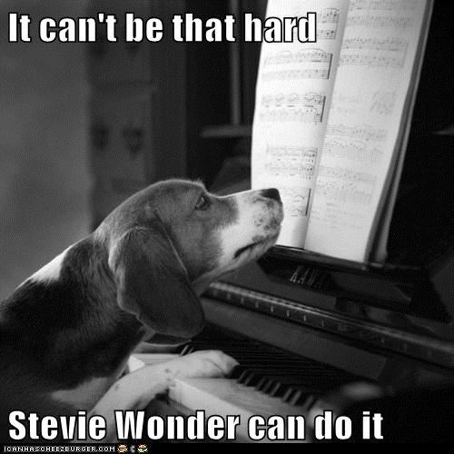 dogs,piano,stevie wonder,beagle,i have no idea what im doing