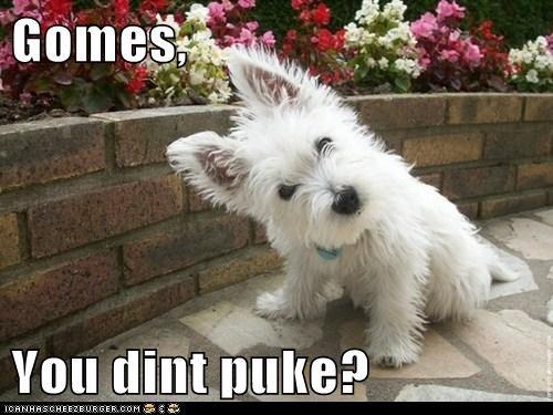 Gomes,  You dint puke?