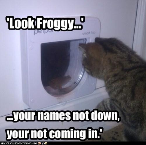 door,list,VIP,captions,Cats,name,frog,exclusive