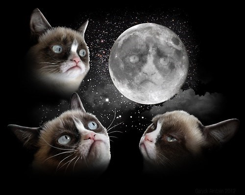 art,moon,grumpy,parodies,Grumpy Cat,tard,three wolf moon