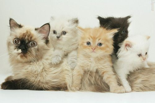 Cyoot Kittehs of teh Day: All Aboard the Mom Train!