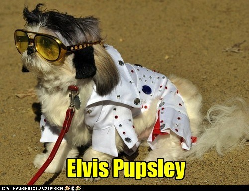 costume,dogs,Elvis Presley,pun,celeb,what breed