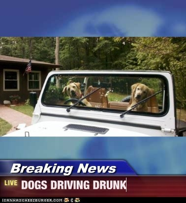 Breaking News - DOGS DRIVING DRUNK