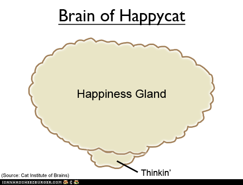 Happycat's Brain