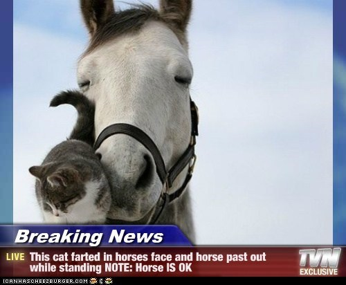 Breaking News - This cat farted in horses face and horse past out while standing NOTE: Horse IS OK