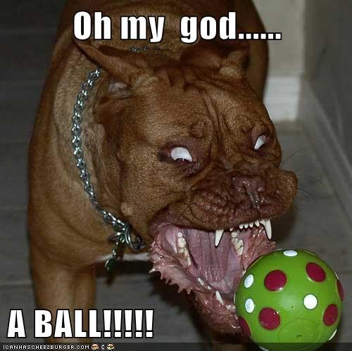 Oh my  god......  A BALL!!!!!